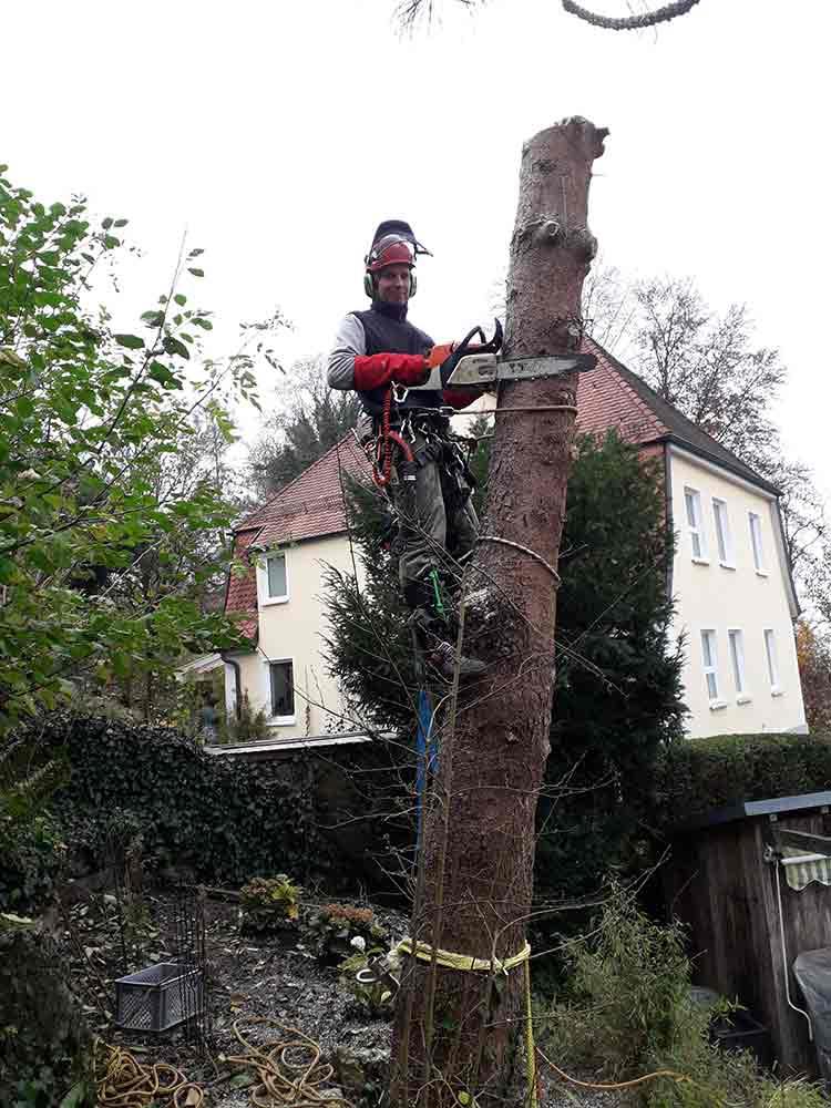 Baumpfleger_guenstig_Bodensee